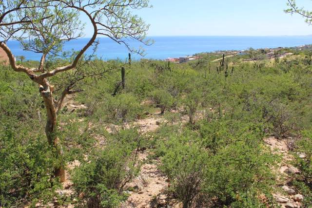Elephant Tree, East Cape, BS  (MLS #19-2999) :: Los Cabos Agent