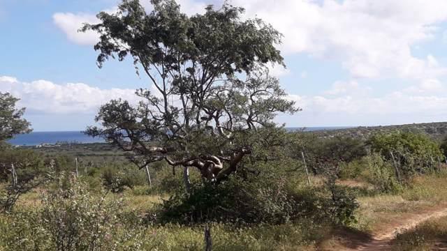 Fraccion ''A'' De Lote De Terr, East Cape, BS  (MLS #19-3175) :: Own In Cabo Real Estate