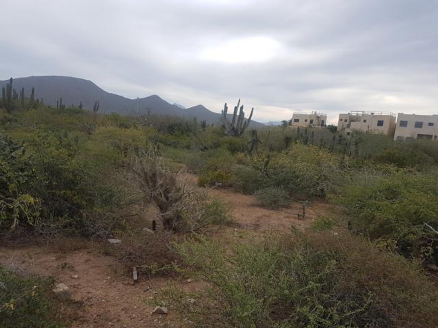 Cerritos Lot 1647, Pacific, BS  (MLS #19-410) :: Los Cabos Agent