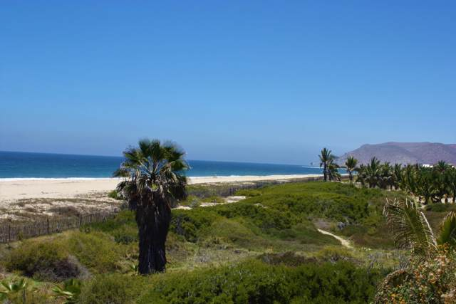 Palm Orchard, Pacific, BS  (MLS #20-10) :: Los Cabos Agent