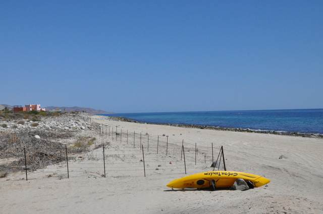 Camino Arroyo San Bartolo, East Cape, BS  (MLS #20-1256) :: Ronival
