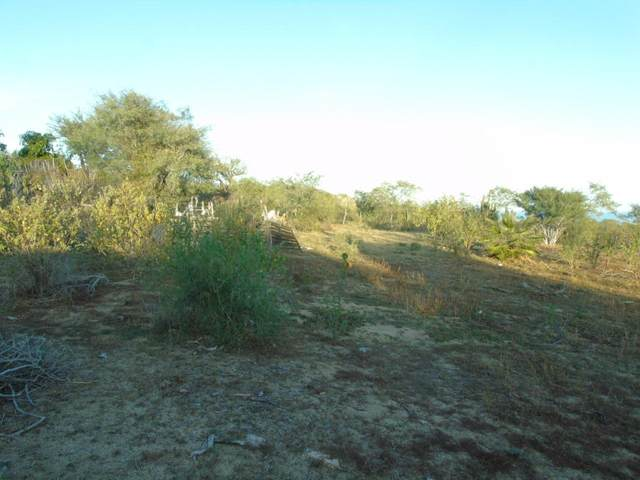 Lote ''Chayito'', San Jose del Cabo, BS  (MLS #20-2323) :: Own In Cabo Real Estate