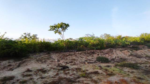 Quiet Point, San Jose del Cabo, BS  (MLS #20-2397) :: Coldwell Banker Riveras