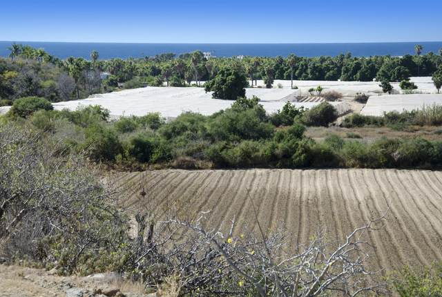 Calle Pitaya Parcel 150 Z6 P 1/3, Pacific, BS  (MLS #20-2899) :: Own In Cabo Real Estate