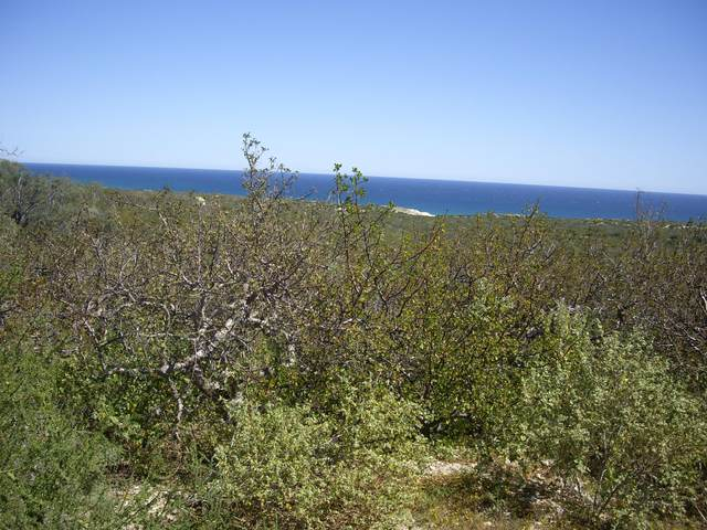 Sin Nombre, East Cape, BS  (MLS #20-806) :: Own In Cabo Real Estate