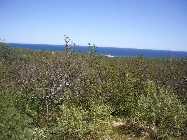 Sin Nombre, East Cape, BS  (MLS #20-806) :: Los Cabos Agent