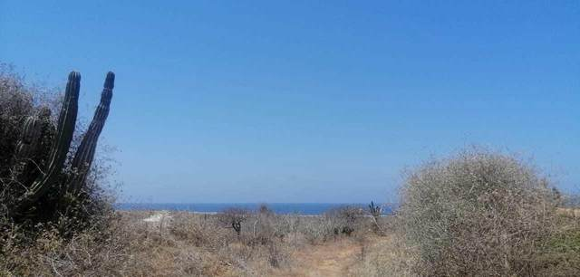 46 Hectares, Comondu, BS  (MLS #21-1135) :: Own In Cabo Real Estate