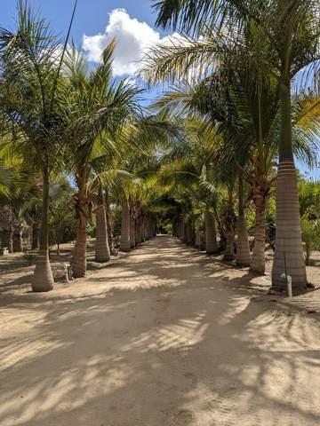 Road To The Beach La Cachora, Pacific, BS  (MLS #21-1652) :: Ronival