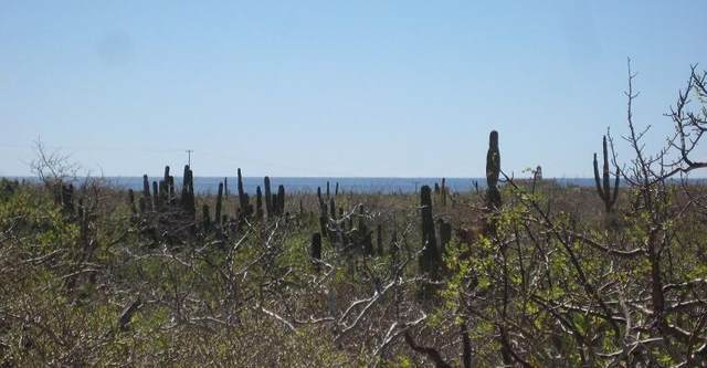 Sin Nombre, Pacific, MX  (MLS #21-2018) :: Own In Cabo Real Estate