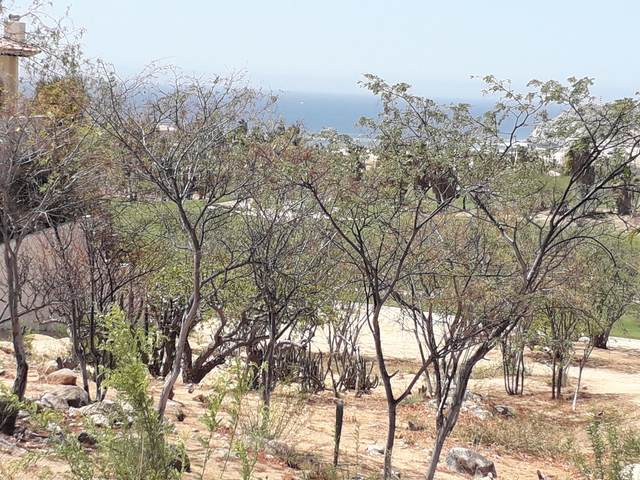 24 Las Colinas, Bcs, Cabo Corridor, MX  (MLS #21-2234) :: Own In Cabo Real Estate
