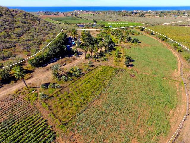 Palm And Produce, Pacific, MX  (MLS #21-3269) :: Own In Cabo Real Estate