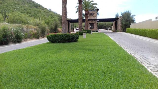 Boulevard Via De Lerry, Cabo San Lucas, BS  (MLS #18-2596) :: Ronival