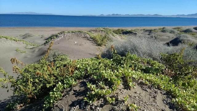 Lot 37 Hwy.La Paz-Sn.Juan De La Costa, La Paz, BS  (MLS #20-2988) :: Own In Cabo Real Estate