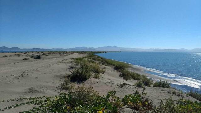 Lot 48 El Mogote-Hwy.La Paz-Snjuan C., La Paz, BS  (MLS #20-2999) :: Own In Cabo Real Estate