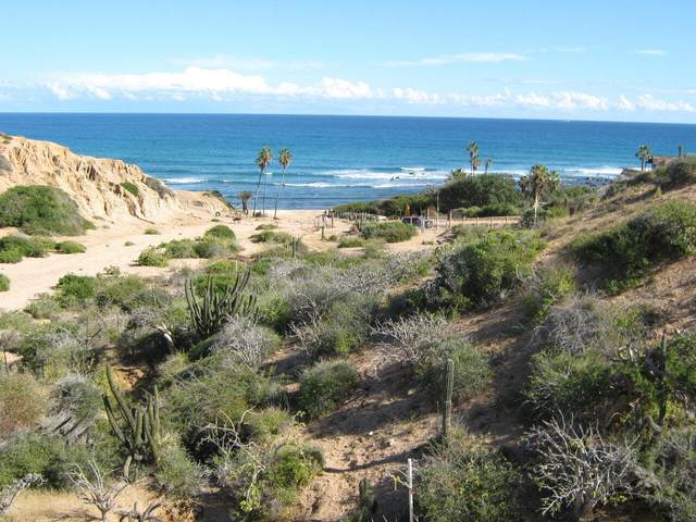 East Cape Rd, East Cape, BS  (MLS #20-2529) :: Own In Cabo Real Estate