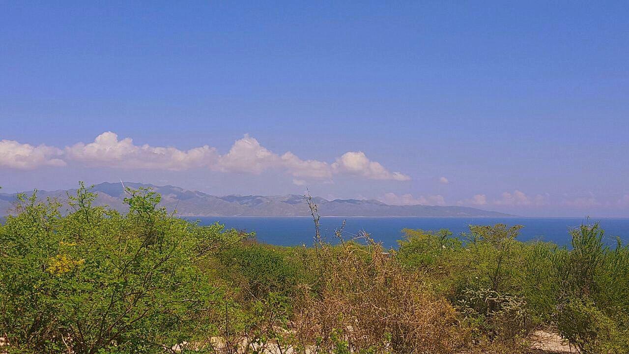 Alga Marina - Photo 1