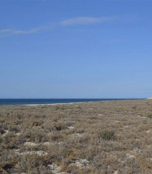 A-92 La Ribera Baja California Sur, East Cape, BS  (MLS #19-1762) :: Los Cabos Agent