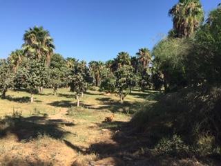 FRACC 5 La Choya, San Jose del Cabo, BS  (MLS #19-1835) :: Own In Cabo Real Estate