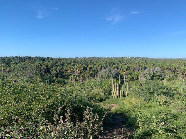 Camino La Poza, Pacific, BS  (MLS #19-3504) :: Own In Cabo Real Estate