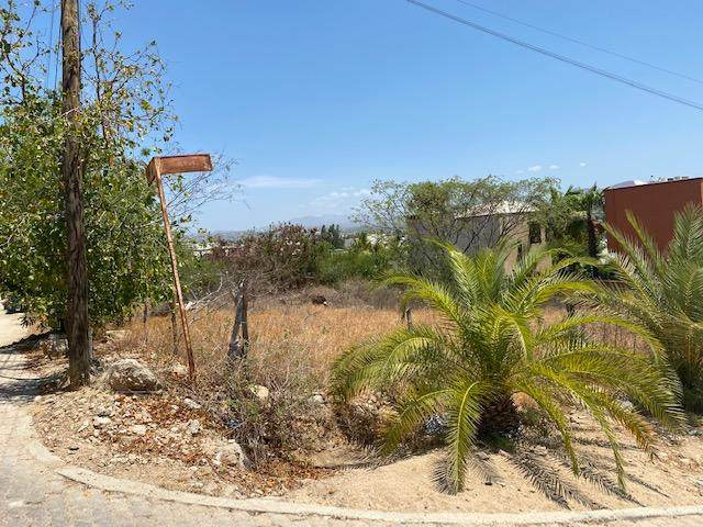 San Lucas, Cabo San Lucas, BS  (MLS #20-1777) :: Own In Cabo Real Estate
