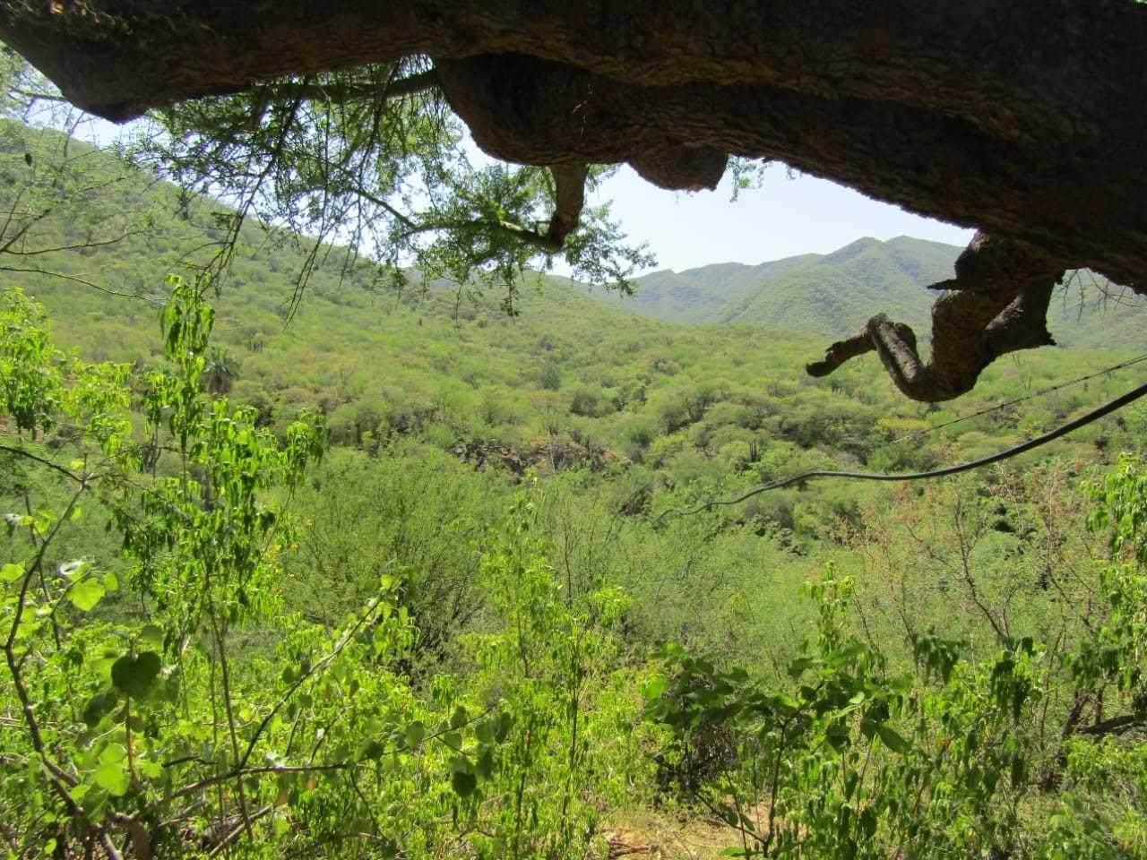 Predio Palo Verde - Photo 1
