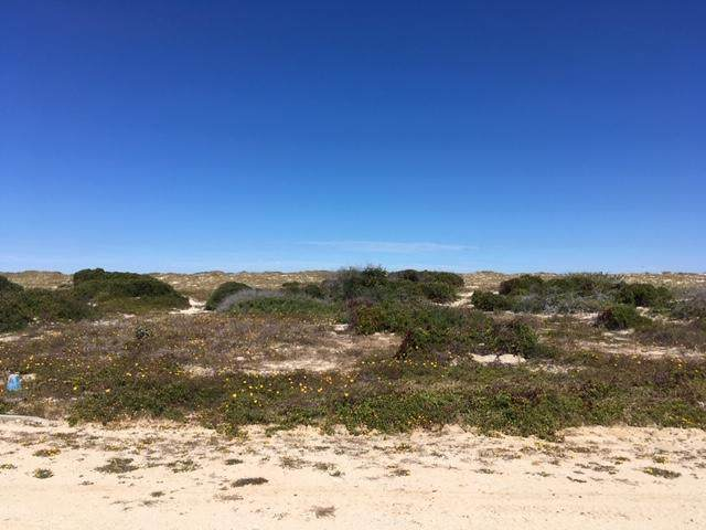 A102 Ave Playa Tortuga, East Cape, BS  (MLS #20-714) :: Own In Cabo Real Estate