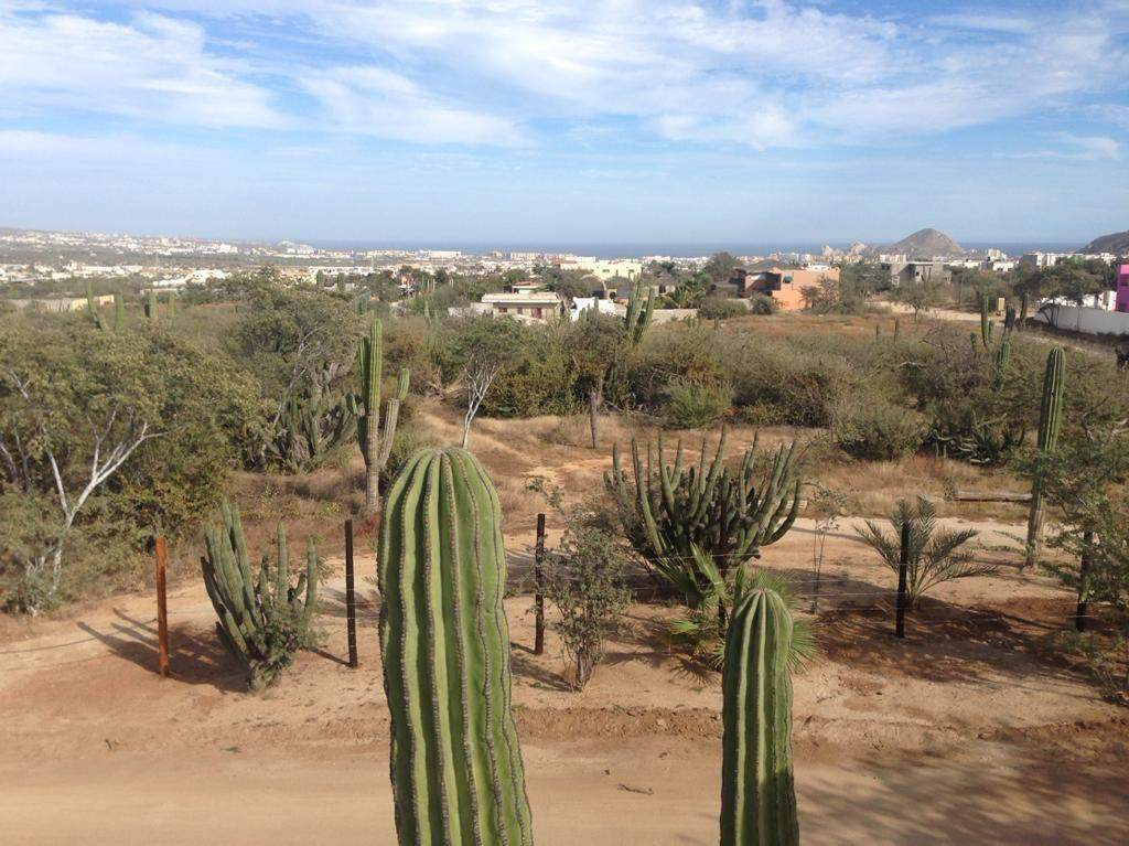 Sierra San Pedro Martir - Photo 1