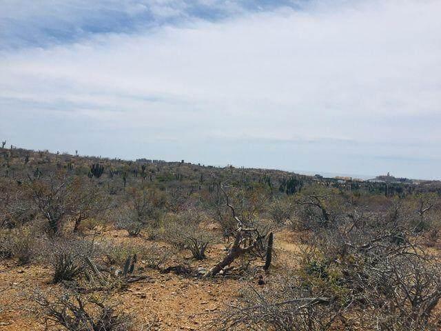 Cerritos Area, Pacific, MX  (MLS #21-2153) :: Ronival