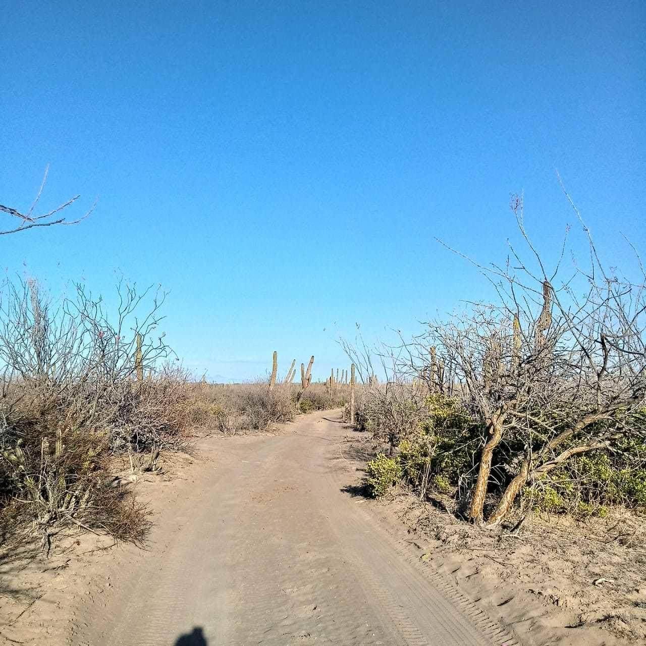 Parcela 60 El Cajete - Photo 1
