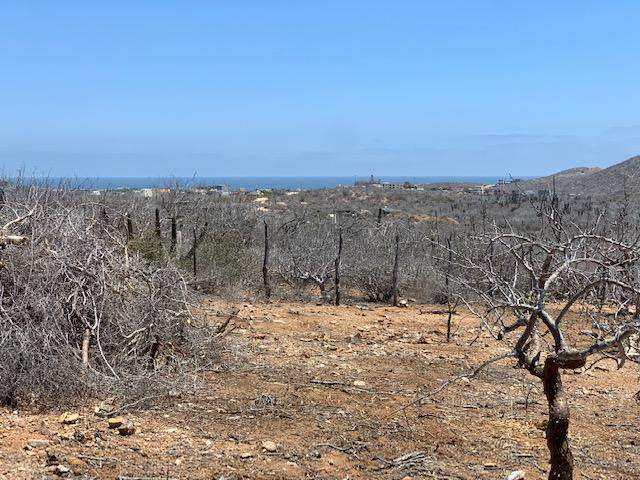 Tina's Fenced Lot, Pacific, MX  (MLS #21-2572) :: Ronival