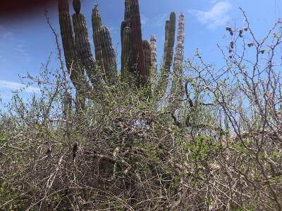 Calle Sin Nombre, Pacific, MX  (MLS #21-2661) :: Ronival