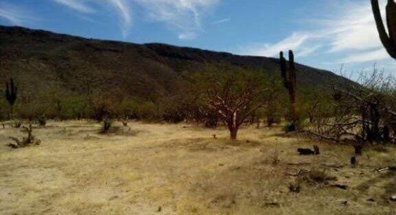 Mazquitito, La Paz, MX  (MLS #21-3266) :: Own In Cabo Real Estate