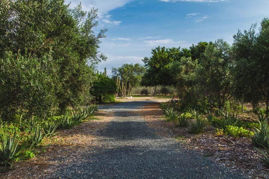 Las Playitas Road - Photo 1