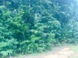 124 Meadow Wood Loop - Photo 2