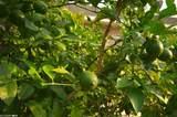 4628 Spinnaker Way - Photo 25