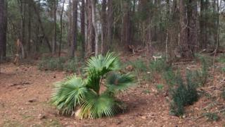 0 Buzbee Road, Spanish Fort, AL 36527 (MLS #251249) :: Jason Will Real Estate