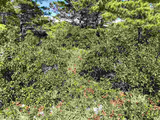 0 River Road, Orange Beach, AL 36561 (MLS #275853) :: Jason Will Real Estate