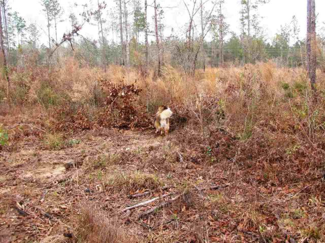 Lot 6 County Road 64, Robertsdale, AL 36567 (MLS #261361) :: Gulf Coast Experts Real Estate Team
