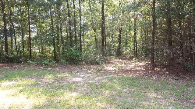 0 Highway 31, Brewton, AL 36426 (MLS #229006) :: Dodson Real Estate Group
