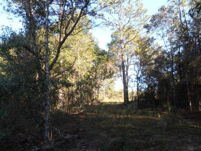 9268 Soldier Creek Rd, Lillian, AL 36549 (MLS #233049) :: Elite Real Estate Solutions