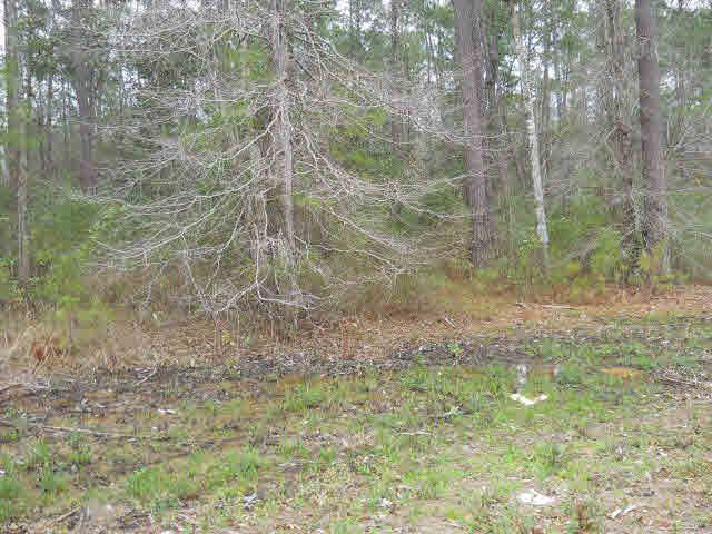0 Juniper Ridge Rd, Brewton, AL 36426 (MLS #237204) :: Gulf Coast Experts Real Estate Team