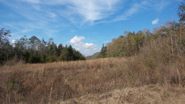 0 Washington Court, Flomaton, AL 36441 (MLS #249647) :: ResortQuest Real Estate