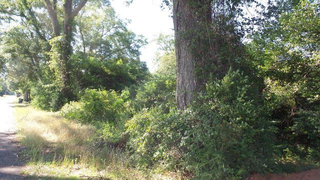 0 Mt Carmel Rd, Jay, FL 32565 (MLS #253880) :: Gulf Coast Experts Real Estate Team