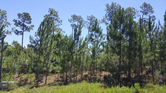 0 Wildflower Trail, Spanish Fort, AL 36527 (MLS #254034) :: Ashurst & Niemeyer Real Estate