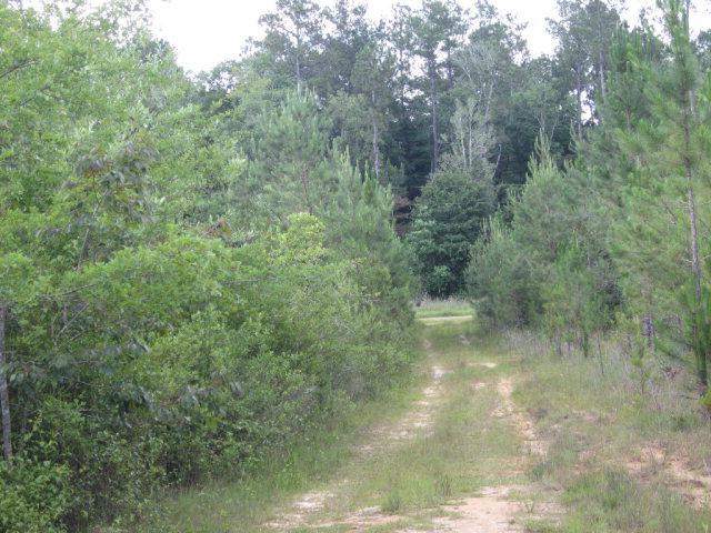 0 County Road 8, Deer Park, AL 36529 (MLS #255008) :: Gulf Coast Experts Real Estate Team
