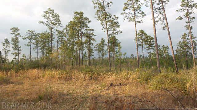 0 Lewis Rd, Jay, FL 32570 (MLS #273439) :: Gulf Coast Experts Real Estate Team