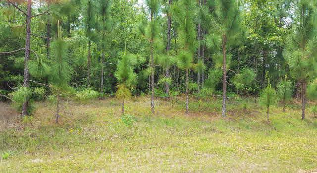 0 Juniper Creek Rd, Brewton, AL 36426 (MLS #239699) :: Gulf Coast Experts Real Estate Team