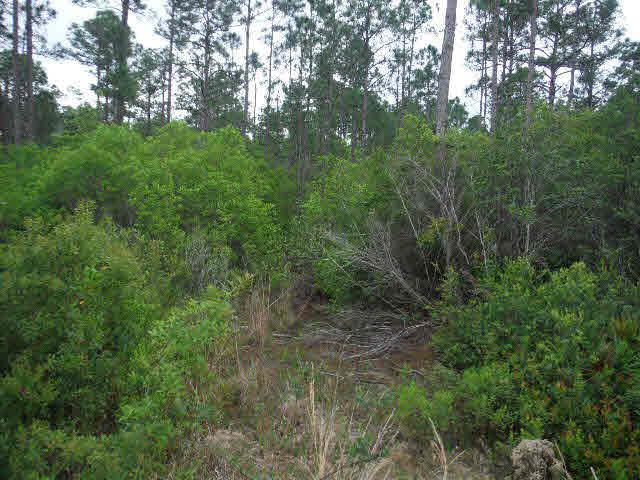 0 Rester Av, Lillian, AL 36549 (MLS #252658) :: Gulf Coast Experts Real Estate Team