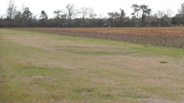 1 Oak Hollow Lane, Flomaton, AL 36441 (MLS #254793) :: Elite Real Estate Solutions