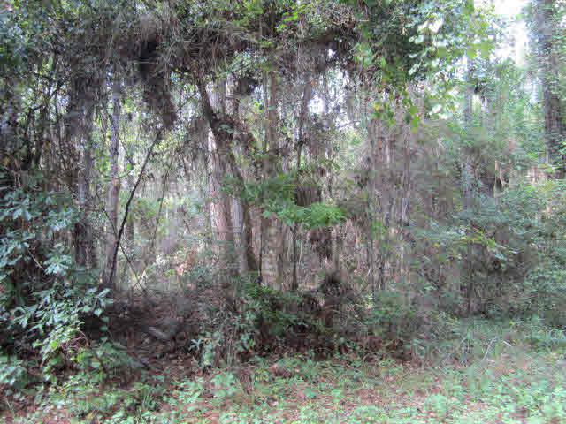 0 Baudin Lane, Magnolia Springs, AL 36555 (MLS #258058) :: Jason Will Real Estate